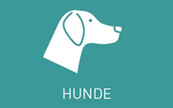 Faszienrollen für Hunde