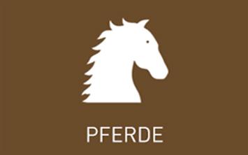 Faszienrollen für Pferde