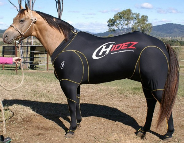 Horse Travel & Recovery Suit - Kompressionsanzug